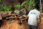Illegal logging operation in Borneo [kalteng_0243]