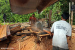 Illegal logging operation in Borneo [kalteng_0244]
