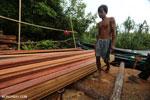 Illegal logging in Borneo [kalteng_0271]