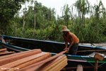 Illegal logging in Borneo [kalteng_0274]