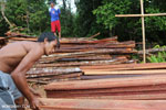 Illegal logging in Borneo [kalteng_0277]