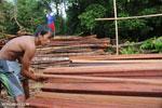 Illegal logging in Borneo [kalteng_0279]