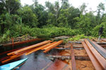 Illegal logging in Borneo