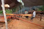 Illegal logging in Borneo [kalteng_0304]