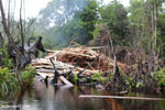 Illegal logging in Borneo [kalteng_0313]