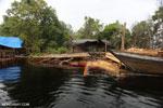 Illegal logging in Borneo [kalteng_0314]