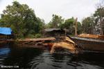 Illegal logging in Borneo [kalteng_0315]