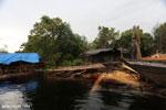 Illegal logging in Borneo [kalteng_0316]