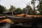 Illegal logging in Borneo [kalteng_0319]