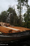 Illegal logging in Borneo [kalteng_0322]