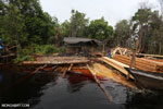 Illegal logging in Borneo [kalteng_0326]