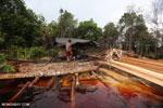 Illegal logging in Borneo [kalteng_0359]
