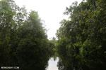 Borneo peat swamp [kalteng_0370]