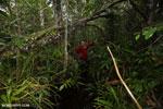 Navigating Borneo's peat forest [kalteng_0371]