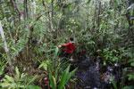 Navigating Borneo's peat forest [kalteng_0385]
