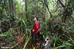 Navigating Borneo's peat forest [kalteng_0399]