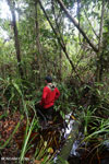 Navigating Borneo's peat swamp [kalteng_0400]