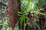 Plant [kalteng_0440]