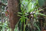Plant [kalteng_0441]