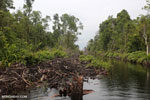 Canal in the Borneo peatland
