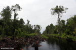 Canal in the Borneo peat forest [kalteng_0453]