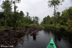 Canal in the Borneo peatland [kalteng_0454]
