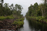 Canal built by the government of Central Kalimantan in 2012 to drain the peat forest [kalteng_0456]
