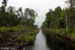 Canal built by the government of Central Kalimantan in 2012 to drain the peat forest [kalteng_0460]