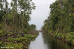 Canal built by the government of Central Kalimantan in 2012 to drain the peat forest [kalteng_0464]