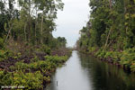 Canal in the Borneo peat forest [kalteng_0467]