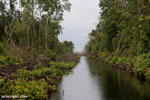 Canal in the Borneo peatland [kalteng_0468]