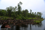 Canal in the Borneo peat forest [kalteng_0479]