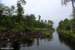 Canal in the Borneo peatland [kalteng_0480]
