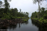 Degraded peatland in Borneo [kalteng_0481]