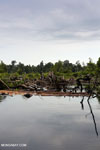 Degraded peatland in Borneo