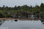Degraded peatland in Borneo [kalteng_0488]