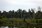 Degraded peatland in Borneo [kalteng_0492]