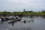 Degraded peatland in Borneo [kalteng_0531]