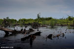 Degraded peatland in Borneo [kalteng_0532]
