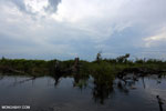 Degraded peatland in Borneo [kalteng_0535]