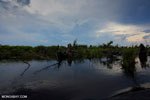 Degraded peatland in Borneo [kalteng_0537]