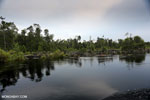 Degraded peatland in Borneo [kalteng_0539]