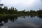 Degraded peatland in Borneo [kalteng_0541]
