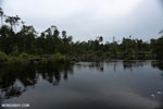 Degraded peatland in Borneo [kalteng_0542]
