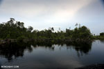 Degraded peatland in Borneo [kalteng_0544]