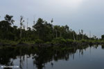 Degraded peatland in Borneo [kalteng_0545]