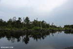 Degraded peatland in Borneo [kalteng_0547]