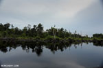 Degraded peatland in Borneo [kalteng_0548]