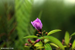 Peatland flower