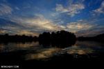 Borneo peat forest at sunrise